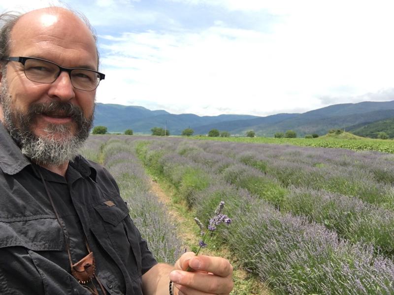 Lavendel destillieren