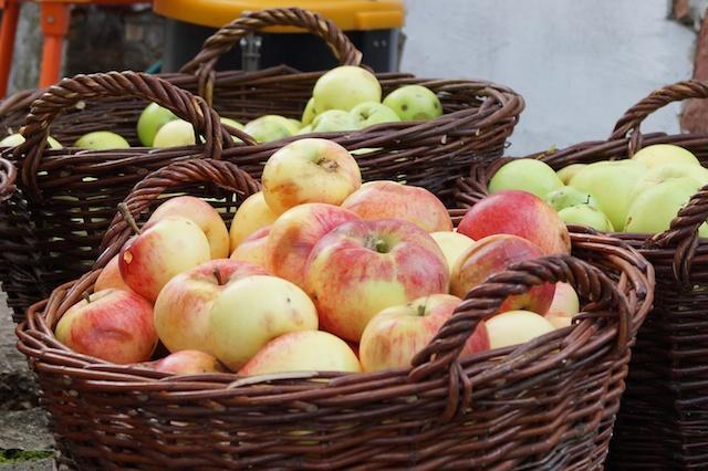 Äpfel aus der Rhön werden am Aromamuseum verarbeitet