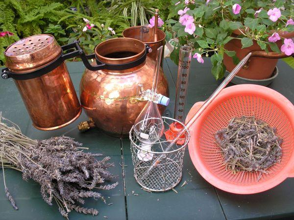 herbs and distilling